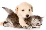 animaux domestiques 2